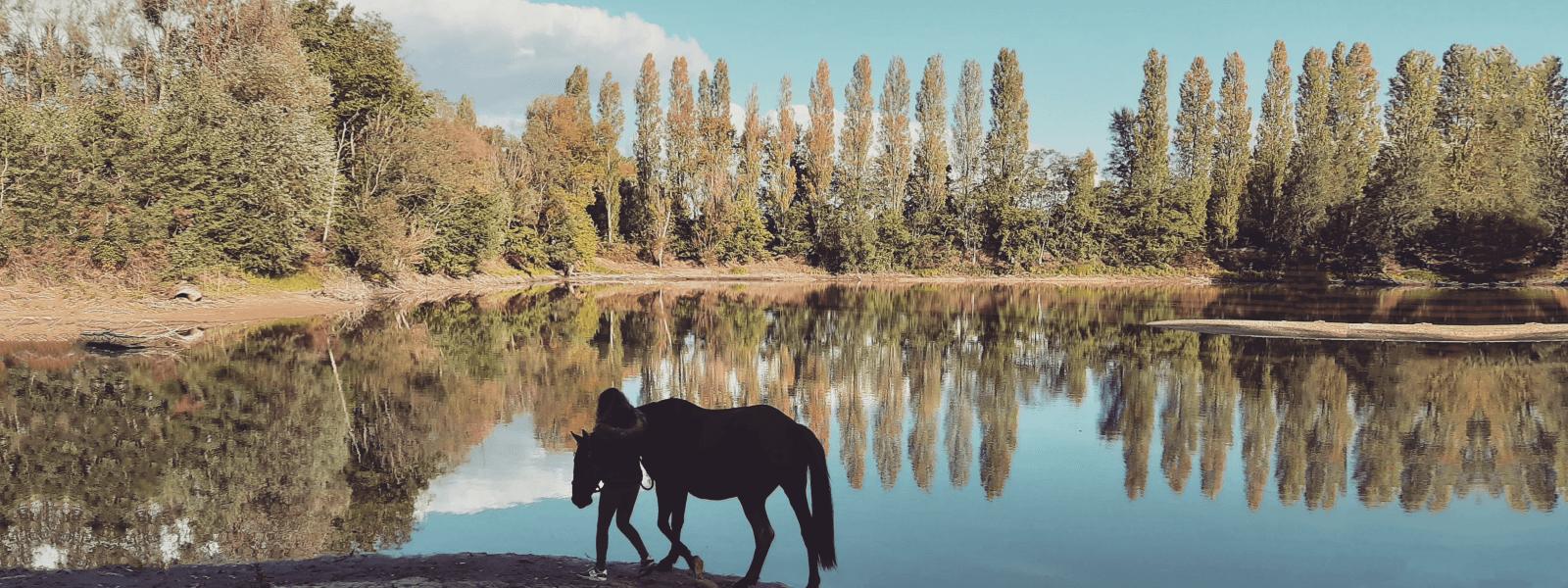 Cheval et sa cavalière autour d'un étang en Sologne avec la forêt qui se reflète comme dans un miroir