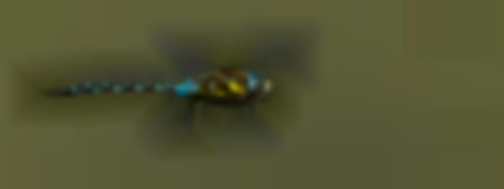 Les Estivales de l'eau - Bolides des airs à Saint Viâtre