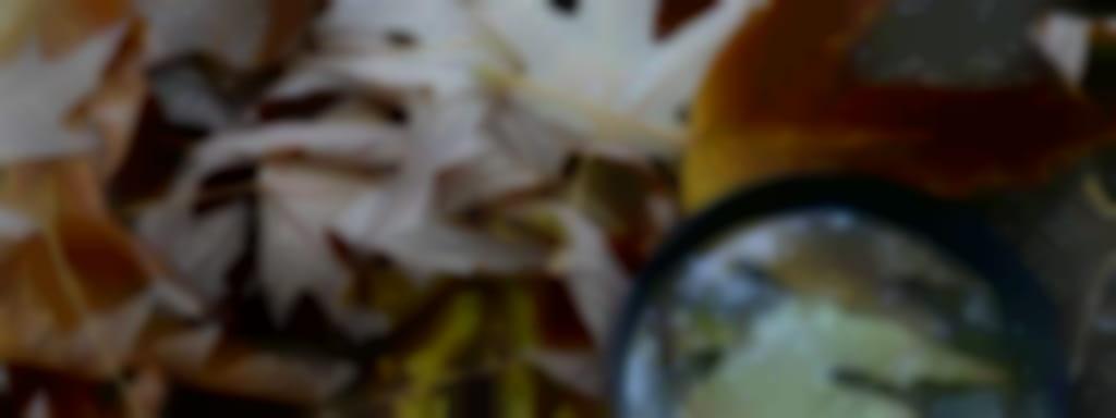 Découvertes Sologne Nature - Peur sur la mare ! à Pruniers-en-Sologne