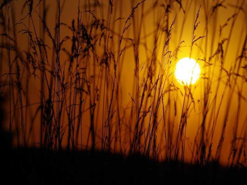 Les Estivales de l'Eau un mardi soir au bord de l'eau à Villeherviers