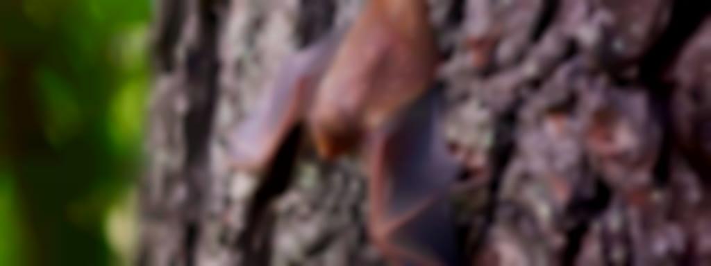 Découvertes Sologne Nature - Nuit de la chauve-souris - Belles de nuit à Selles-sur-Cher