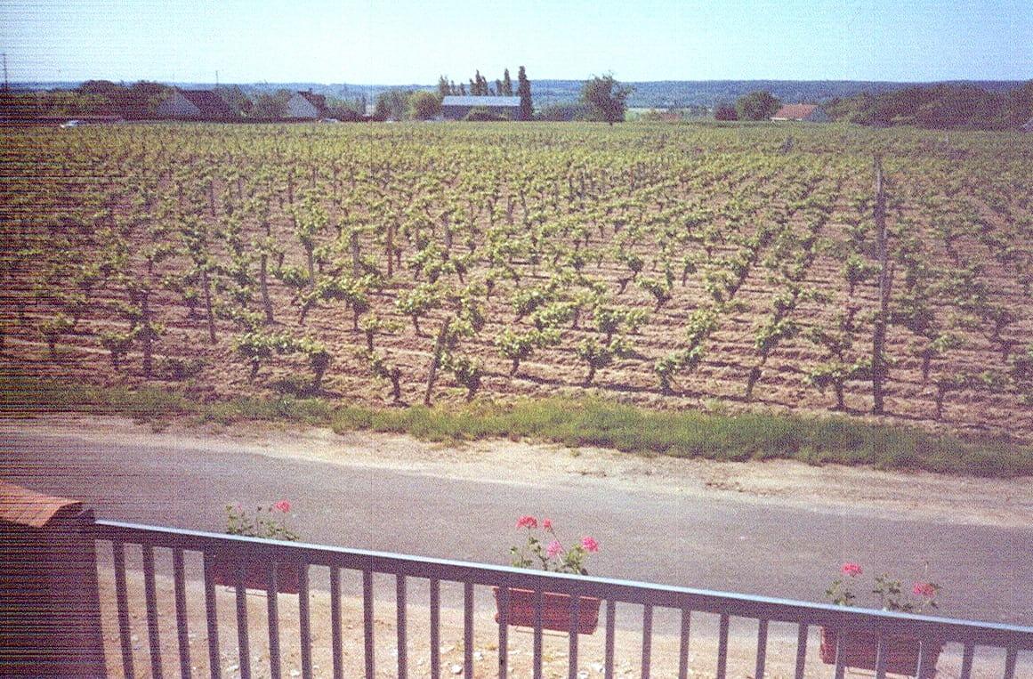 Pique-nique chez le vigneron indépendant au Domaine Tevenot à Candé-sur-Beuvron
