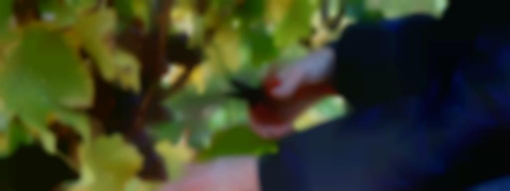 Vignoble du Chant d'Oiseaux