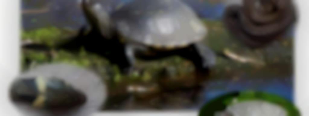 Sortie nature 'Les reptiles'