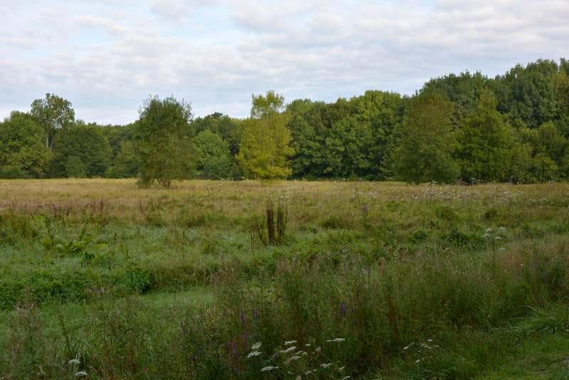 Découvertes Sologne Nature - Chantier Nature à Villeherviers