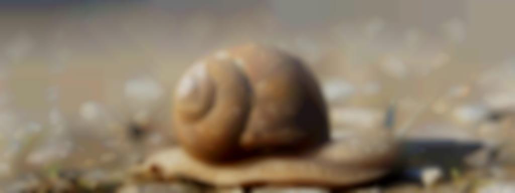 Loiret Escargots