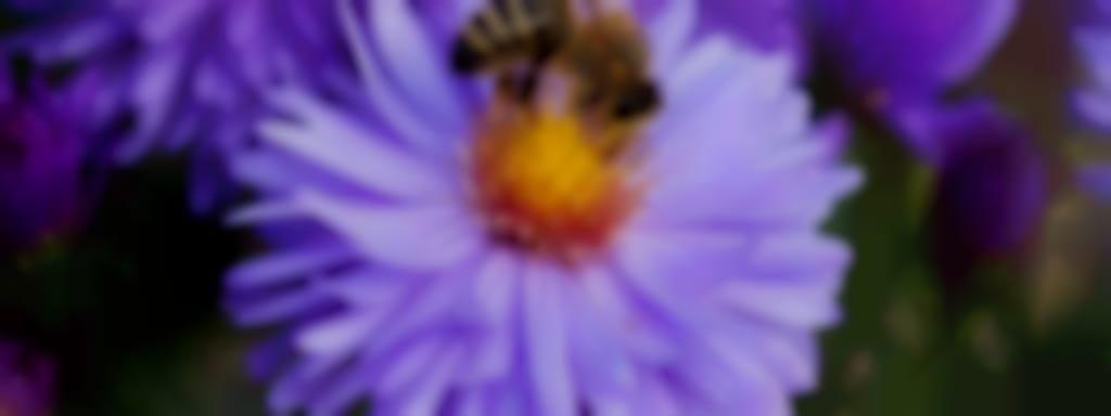 Specialité de miel