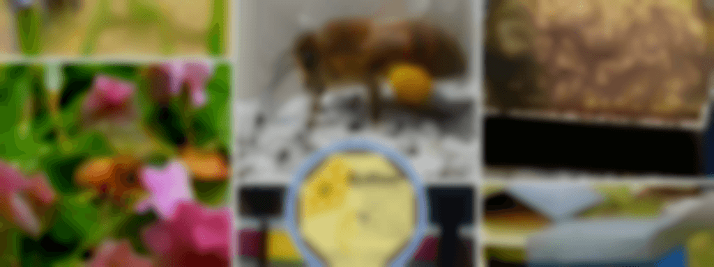 Apinoor - Rucher la Gigotière