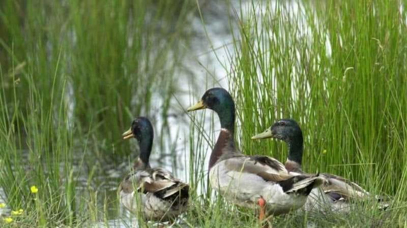 Les Estivales de l'eau - Plumes des étangs à Neung-sur-Beuvron