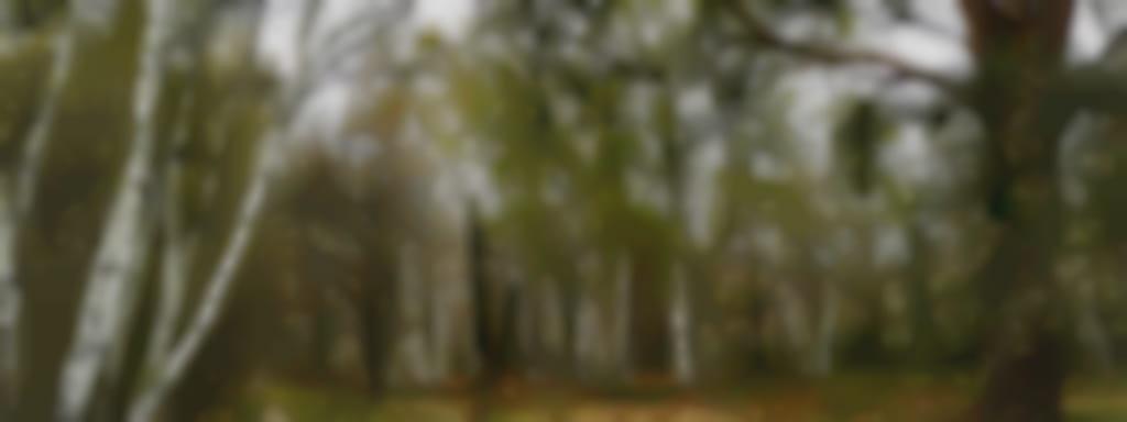 Le sentier des Mares - Le chêne