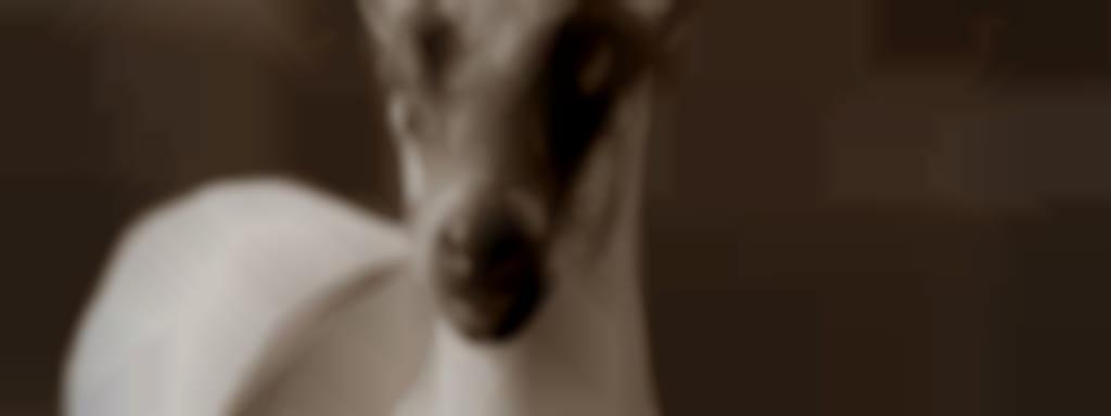 Chèvrerie du Grand Bardelet