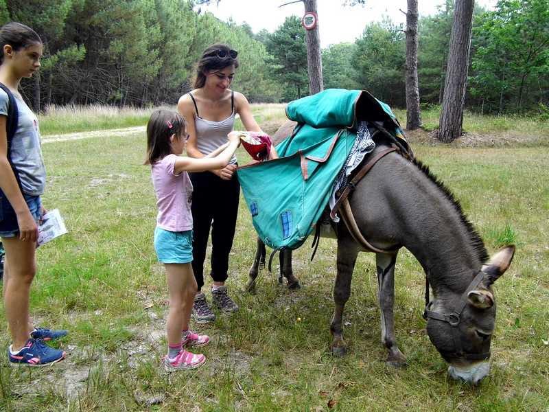 Randonnée 'Traces et indices des animaux'avec Les ânes de Madame