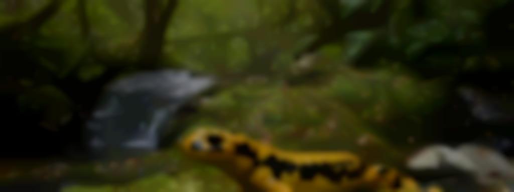 Les Estivales de l'eau - Salamandre et Cie