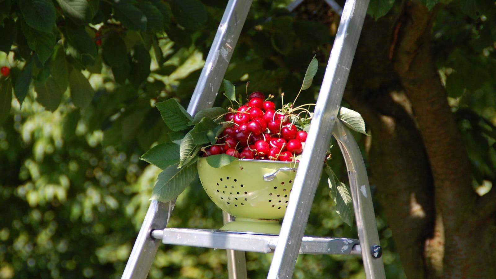 Les Fruits de la Masure