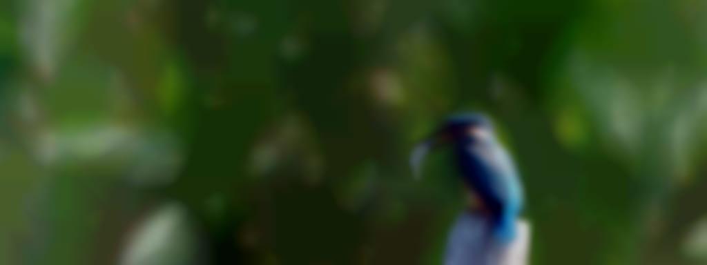 Balade nature 'oiseaux et légendes' avec la Maison de La Loire