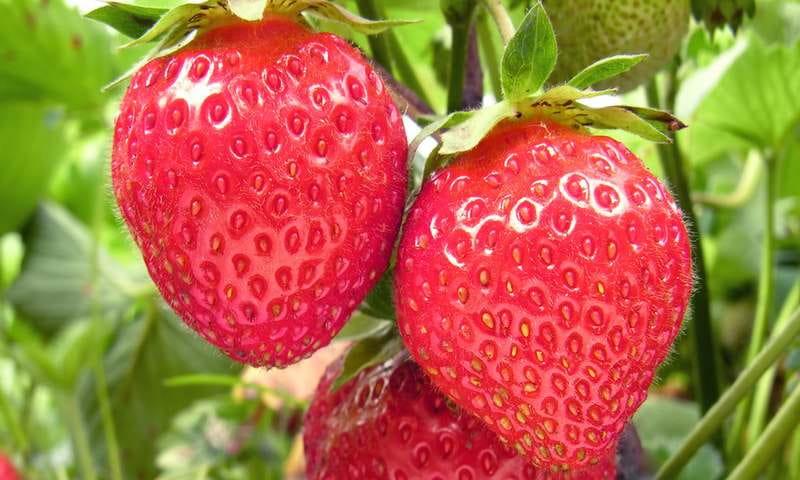 1ère fête de la fraise
