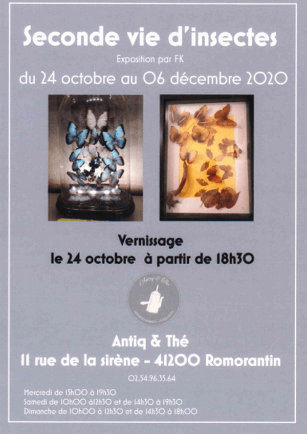 Exposition 'Seconde vie d'insectes'