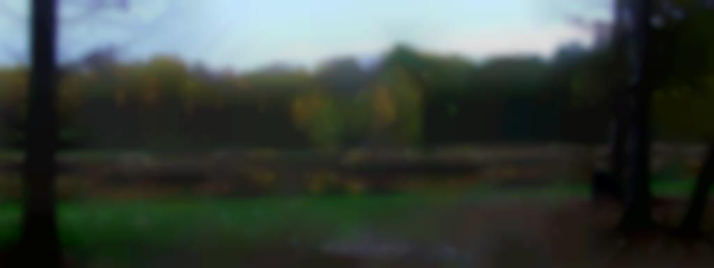 Pêche à la carpe à la canne au coup