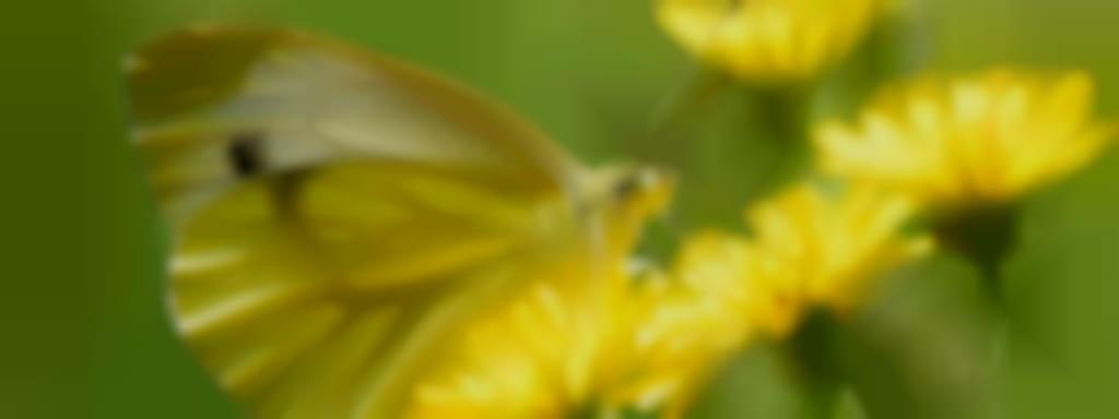Sortie Nature - Les plantes comestibles sauvages